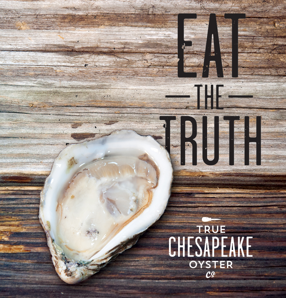 True Chesapeake Oyster Co Adam Aud Graphic Design