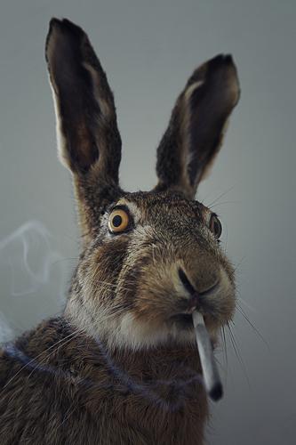 Smoking-Rabbit---romain-boyer-photography-copyright.jpg